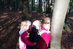 Lunice v gozdu