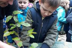Lučke sadijo bonsaje